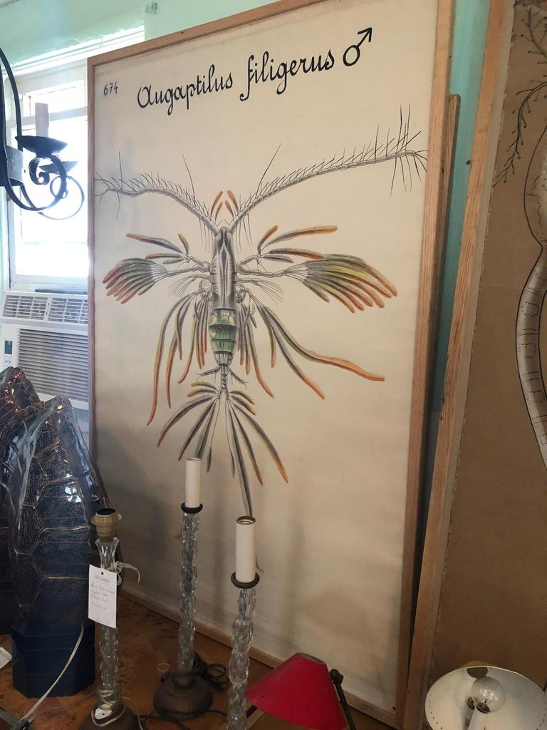 Set of Six Framed Posters for Biology Class In Good Condition For Sale In Washington, DC