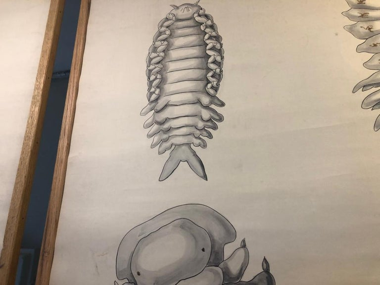 Set of Six Framed Posters for Biology Class For Sale 3