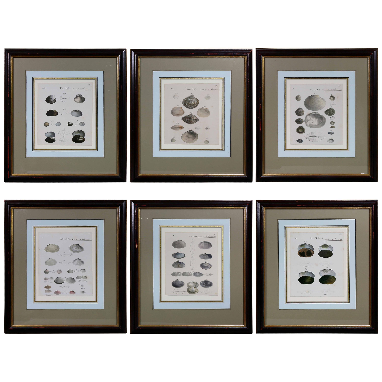 Set of Six Framed Prints of Seashells