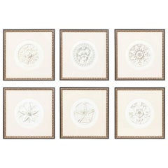 "Set of Six French ""Fiore Ornementale"" Rosettes Botanical Prints Framed"