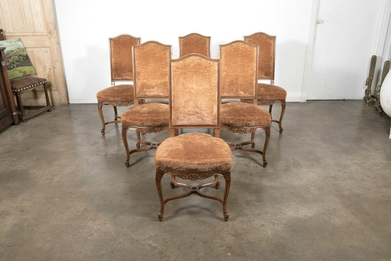 Set of six French Louis XV style dining chairs, circa 1930s. Handcrafted of cherrywood, and having a high chapeau de gendarme back and brass nailhead trim, each side chair is decorated with shell motifs on the apron and raised on graceful cabriole