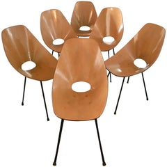 Set of Six Medea Chairs by Vittorio Nobili