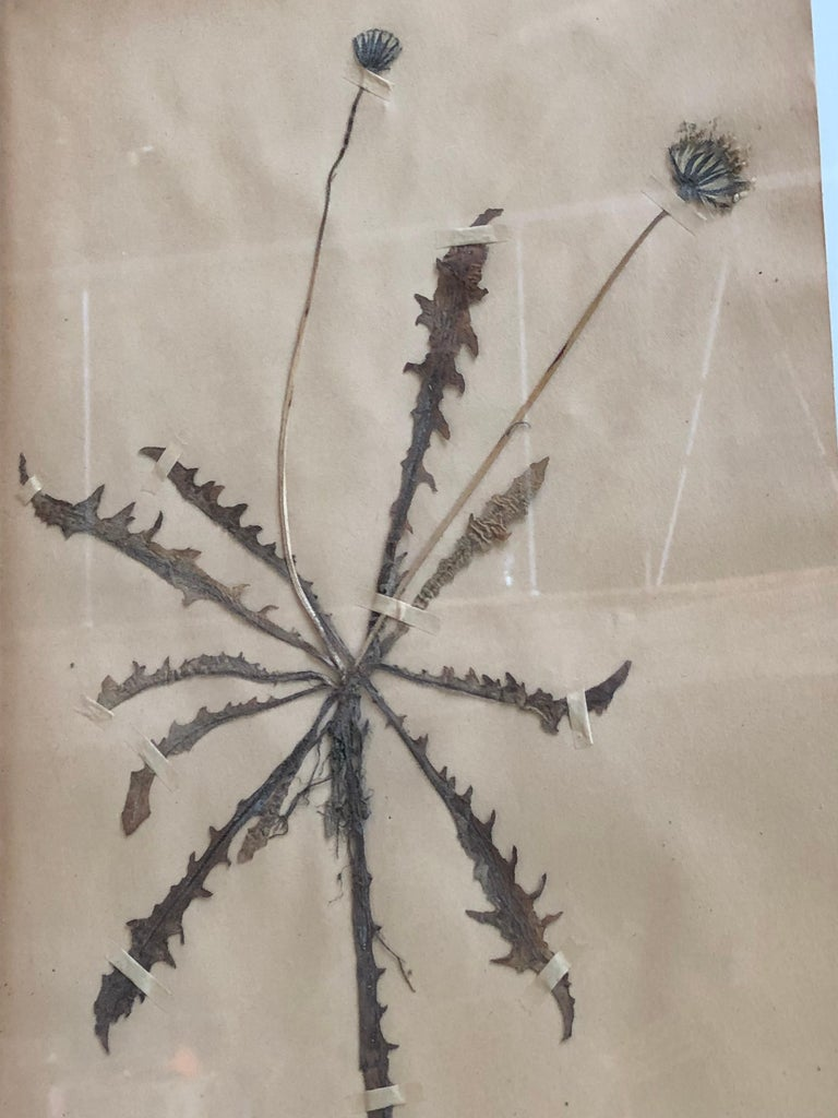 Set of Six Pressed Herbal Specimen For Sale 6
