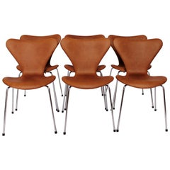 Set of Six Seven Chairs, Model 3107, by Arne Jacobsen and Fritz Hansen, 1967