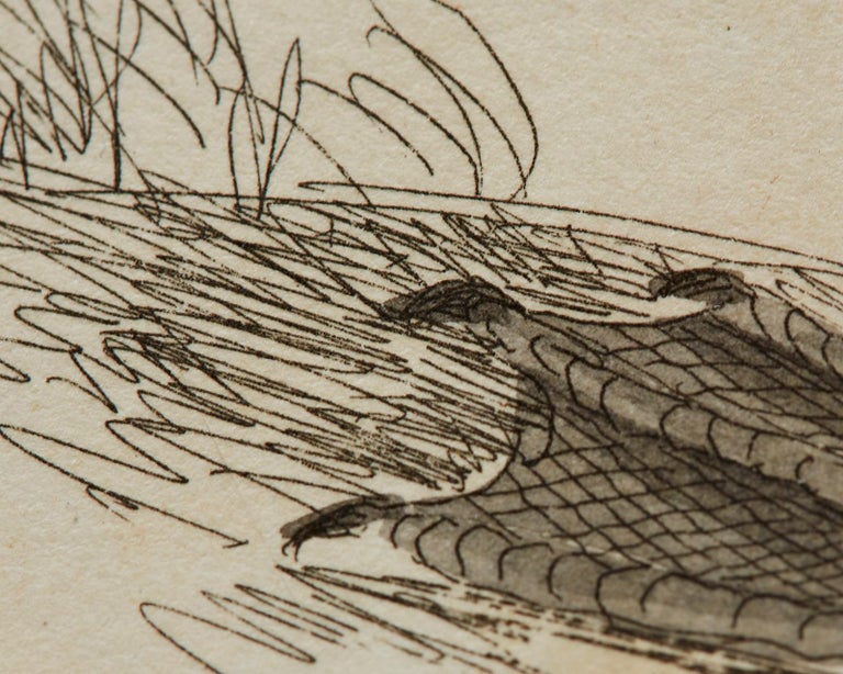 Set of Sixteen 18th Century Bird Etchings by William Lewin For Sale 8