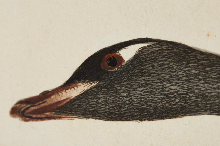 Set of Sixteen 18th Century Bird Etchings by William Lewin For Sale 9