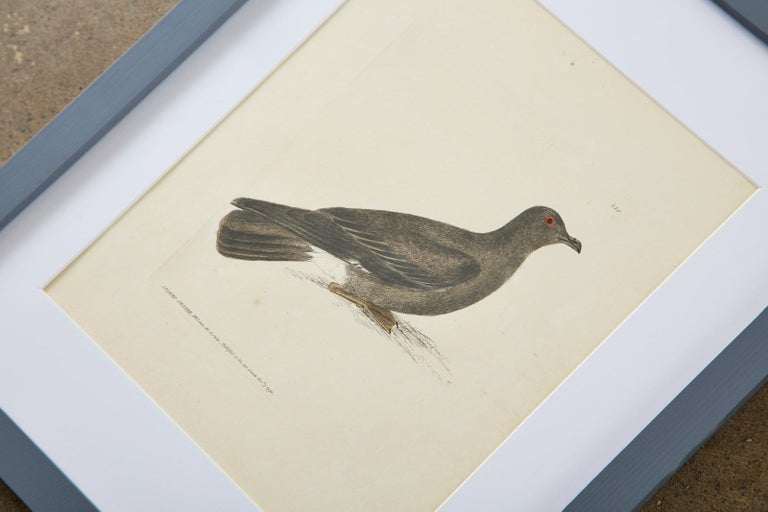 Set of Sixteen 18th Century Bird Etchings by William Lewin For Sale 11
