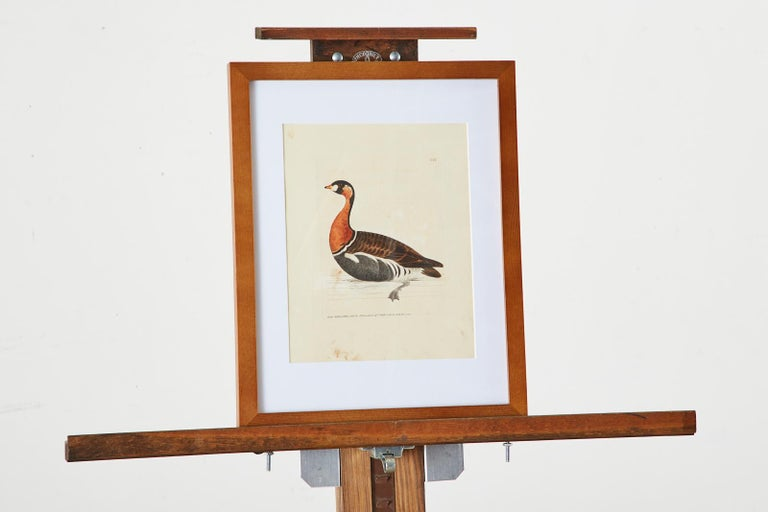Set of Sixteen 18th Century Bird Etchings by William Lewin For Sale 12