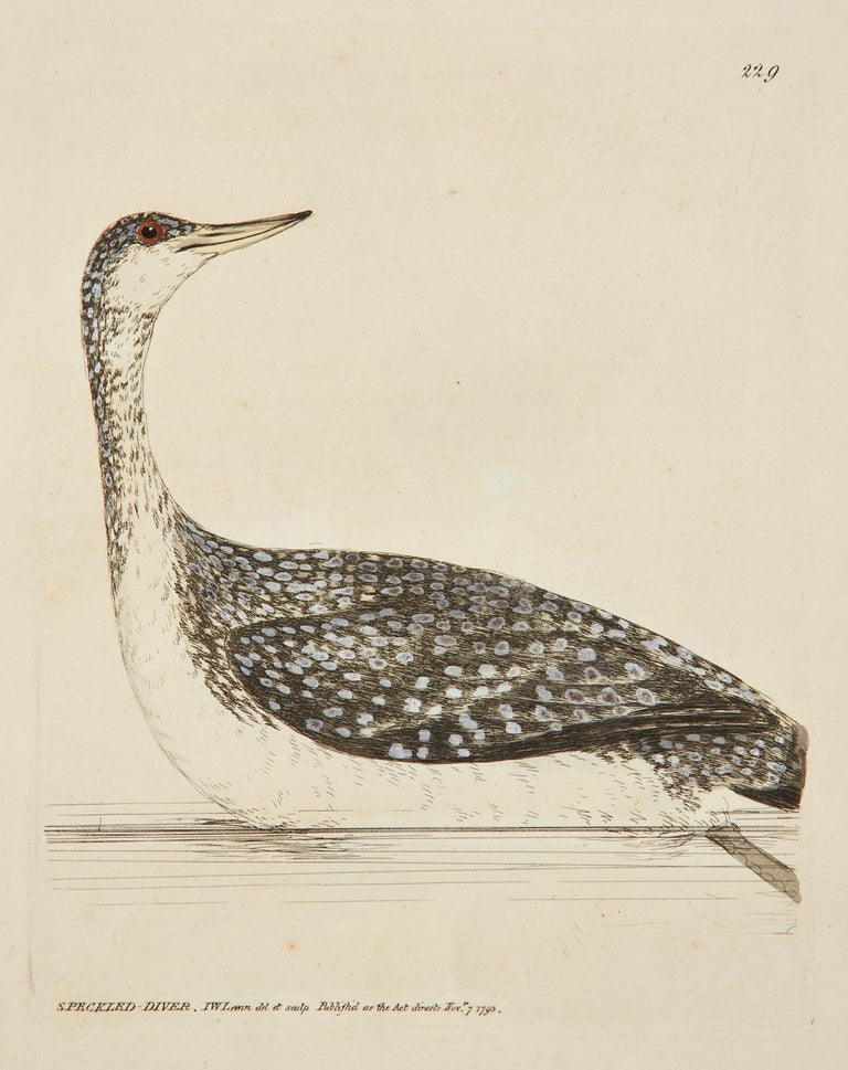 European Set of Sixteen 18th Century Bird Etchings by William Lewin For Sale
