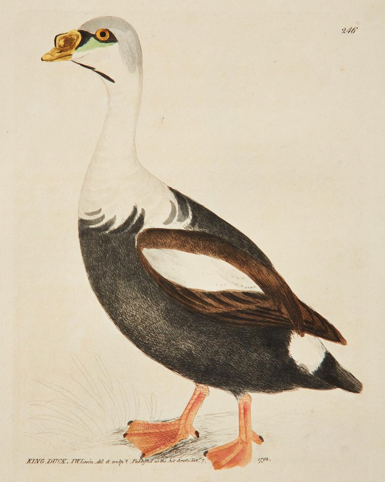 Set of Sixteen 18th Century Bird Etchings by William Lewin In Good Condition For Sale In Oakland, CA