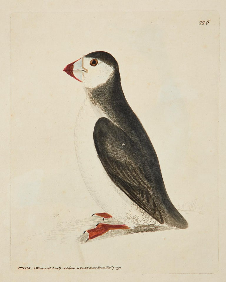 18th Century and Earlier Set of Sixteen 18th Century Bird Etchings by William Lewin For Sale