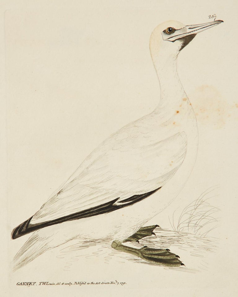 Set of Sixteen 18th Century Bird Etchings by William Lewin For Sale 1