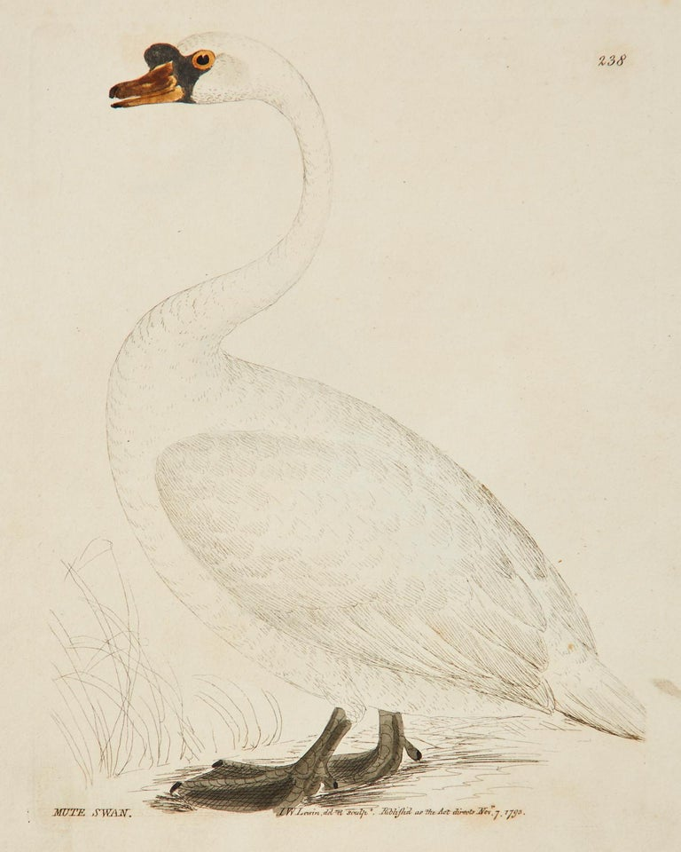Set of Sixteen 18th Century Bird Etchings by William Lewin For Sale 2