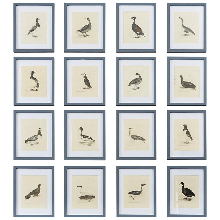 Set of Sixteen 18th Century Bird Etchings by William Lewin For Sale