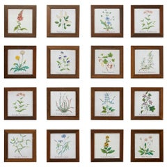 Set of Sixteen Italian Hand Painted Ceramic Botanical Tiles