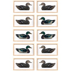 Set of Ten Framed Duck Decoys