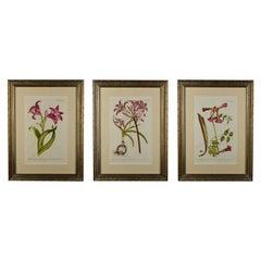 Set of Three 18th Century Philip Miller Prints
