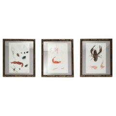 Set of Three 19th Century Framed Sea Life Watercolor Studies