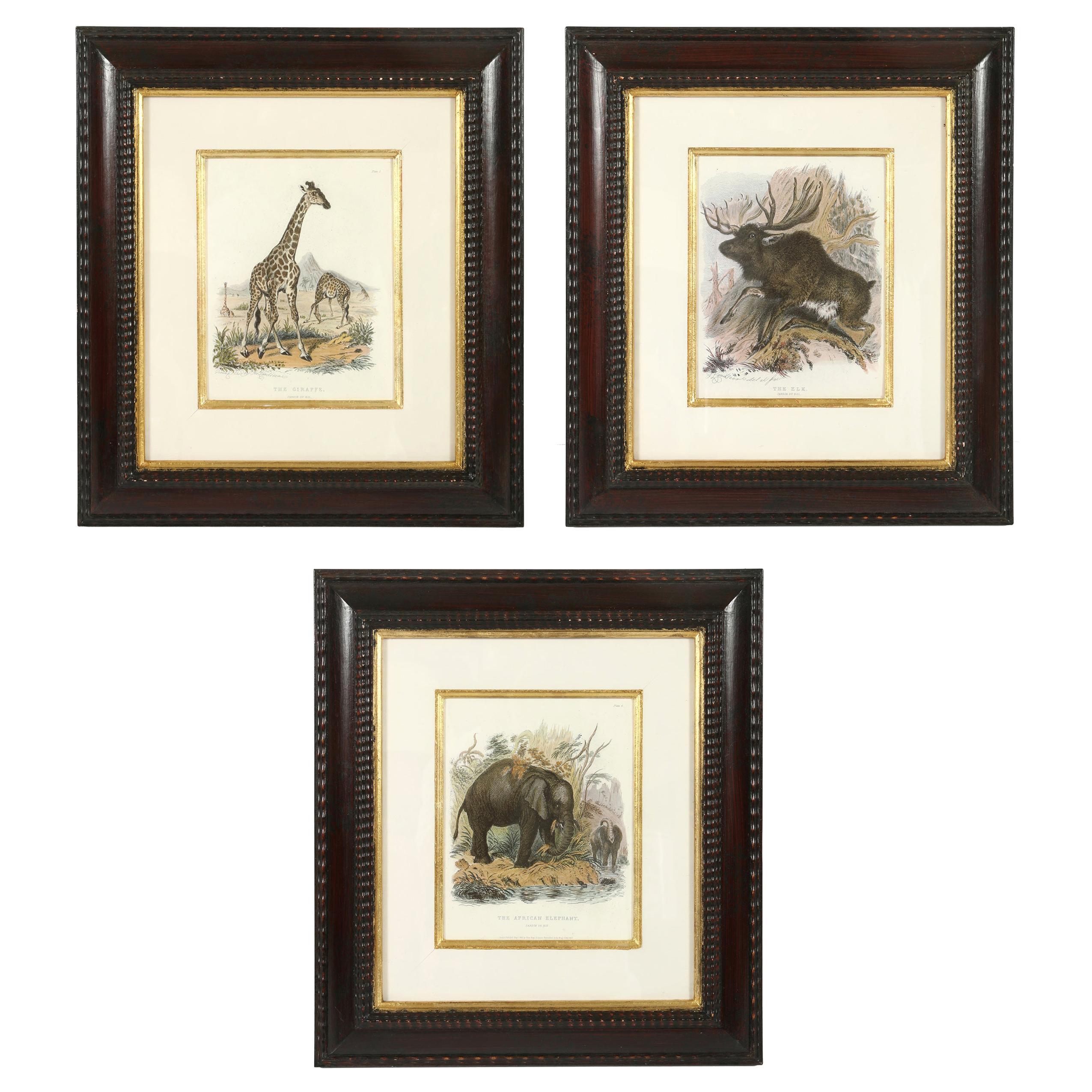 Set of Three Animal Prints in Mahogany Frames