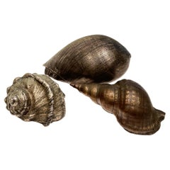 Set of Three Antique Italian Silvered Bronze Seashells
