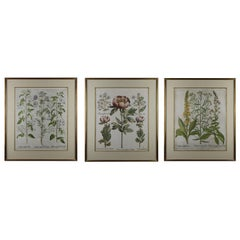 Set of Three Besler Prints