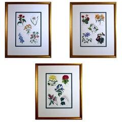 Set of Three Botanical Prints, W. Thompson The English Flower Garden