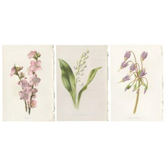 """Set of Three Botany Prints """"Almond - Lily of the Valley - Dodecatheon"""""""
