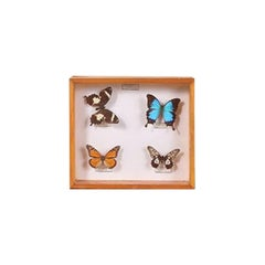 Set of Three Butterfly Boxes