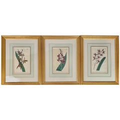 Set of 3 Curtis Hand Colored Original Orchid Engravings, England, 1797-1806