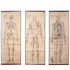 Set of Three Early 20th Century Czechoslovakian Educational Charts, Anatomy