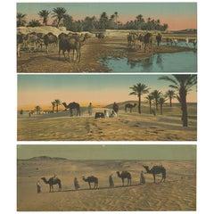 Set of Three Large Panoramic Vintage Postcards of the Desert, circa 1920