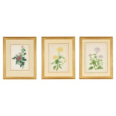 Set of Three Late 18th Century Chinese Botanical Watercolours