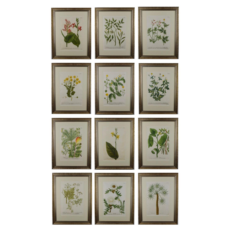 Set of Twelve 18th Century Botanical Engravings by Johann Weinmann