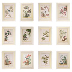 Set of Twelve 18th Century Flower and Bird Prints, P.J. Buchoz, 1776