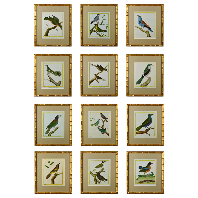 Set of Twelve 18th Century Martinet Birds