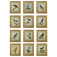 Set of Twelve 18th Century Martinet Birds