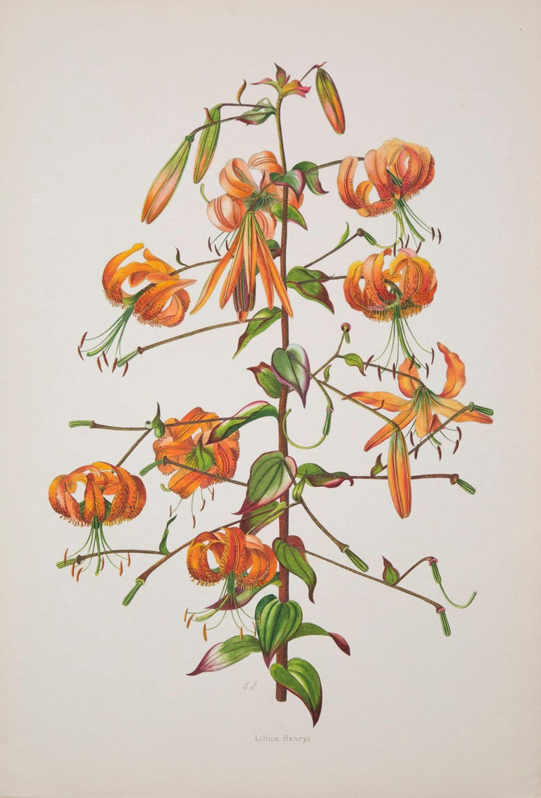 Set of Twelve Antique Botanical Prints, J.H. Elwes, 1877 In Good Condition For Sale In London, GB