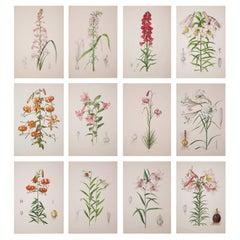 Set of Twelve Antique Botanical Prints, J.H. Elwes, 1877