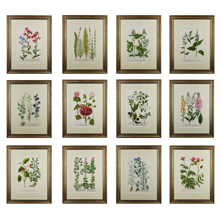 A set of 12 Botanical engravings by Johann Wilhelm Weinmann from the rare first edition of 'Pytanthoza Iconographia'. This was a pioneering work as it made successful use of the color-printed mezzotint process retouched in transparent or opaque