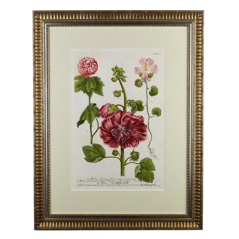 Swiss Set of Twelve Botanical Engravings by Johann Weinmann For Sale