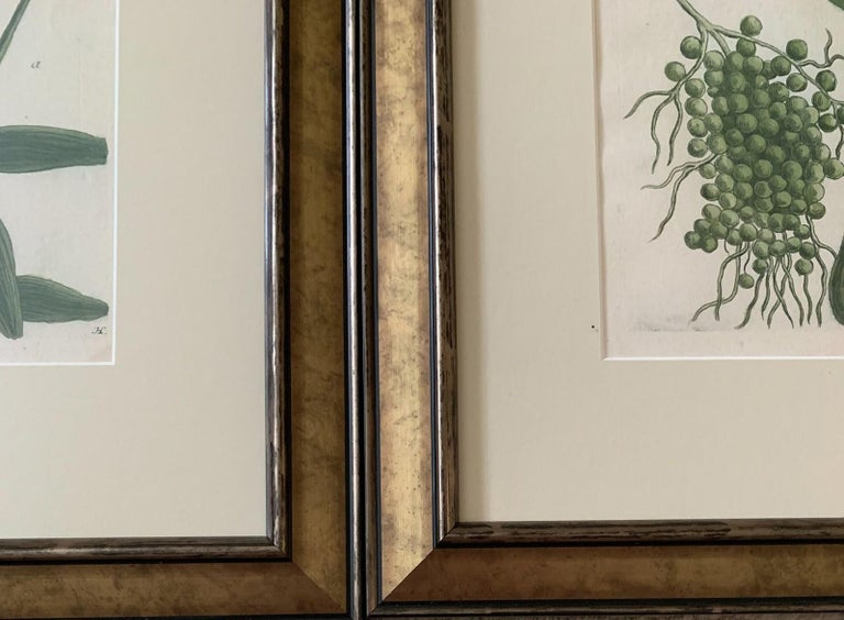 18th Century and Earlier Set of Twelve Botanical Engravings by Johann Weinmann For Sale