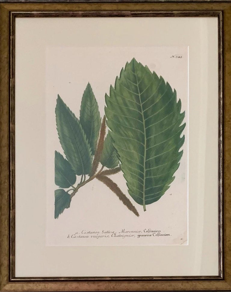 Set of Twelve Botanical Engravings by Johann Weinmann In Good Condition For Sale In Tetbury, Gloucestershire