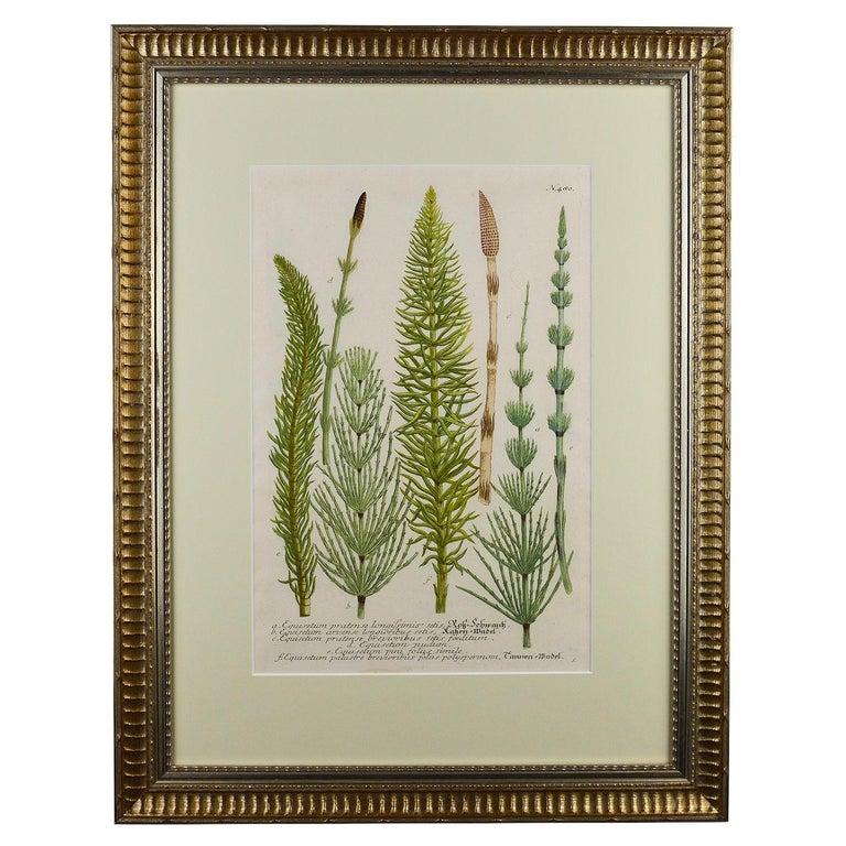 Paper Set of Twelve Botanical Engravings by Johann Weinmann For Sale