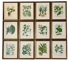 Set of Twelve Botanical Engravings by Johann Weinmann