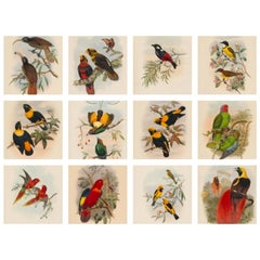Set of Twelve Cream Mounted New Guinea Bird Pictures Prints John Gould 1804-1881