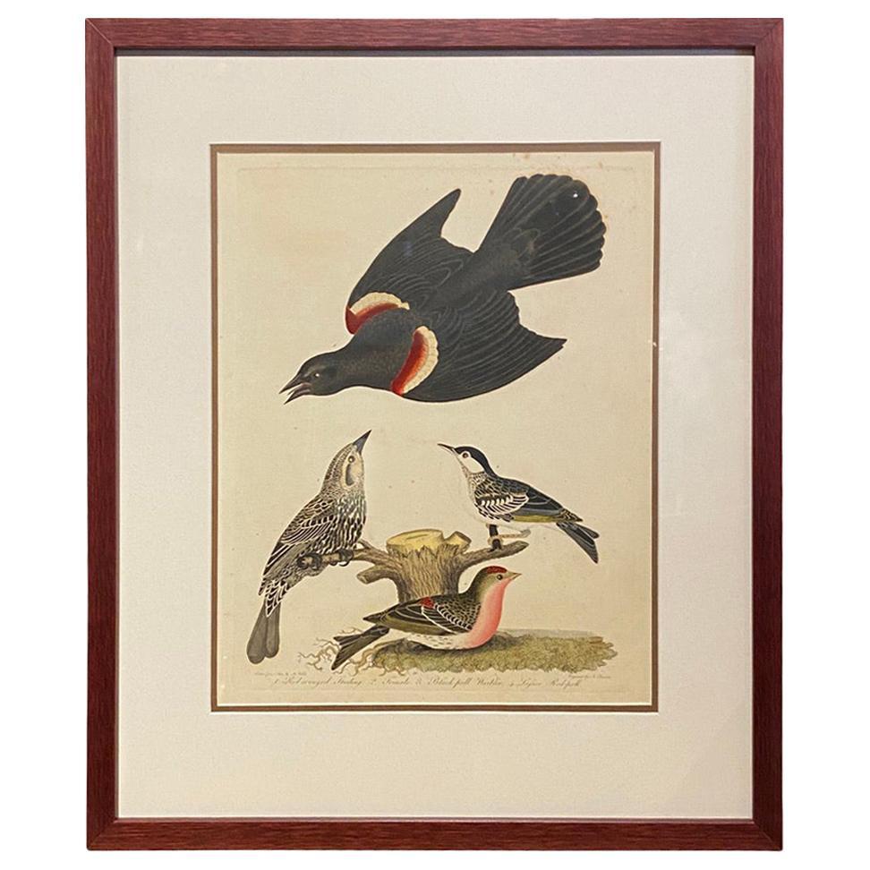 Set of Twelve Hand Colored Engravings of Birds by Alexander Wilson