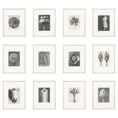 Set of Twelve Karl Blossfeldt Black White Photogravure Botanic Photography, 1942