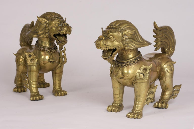 This pair of 1970s Foo dogs are made out of brass and feature the original patina intricate details on the body and head which have fierce expressions. They're also known as temple dogs. This set is ready to be displayed in any home or office for
