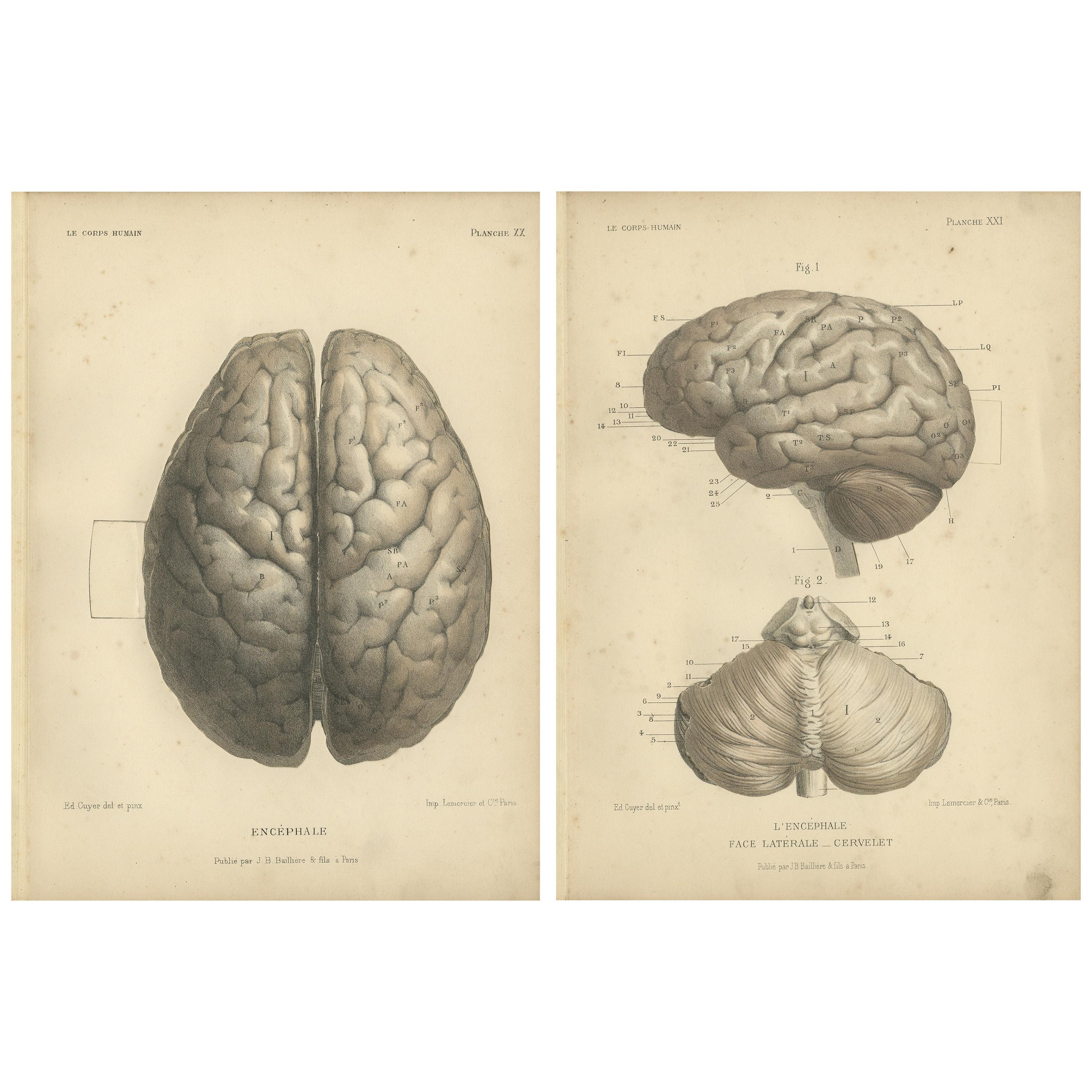Set of Two Antique Prints of the Human Brain by Kuhff '1879'