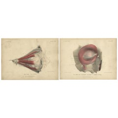 Set of Two Antique Prints of the Human Eye by Kuhff, 1879